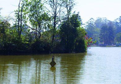 PMSP fecha o Parque do Carmo e inicia vacinação contra a febre amarela no Aricanduva
